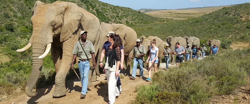 Image of people walking with elephants