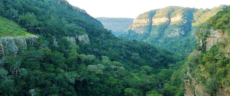 Image of valley at Krantzkloof Nature Reserve